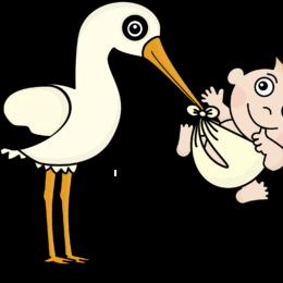 stork-1324371