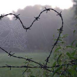 cobweb-1949778