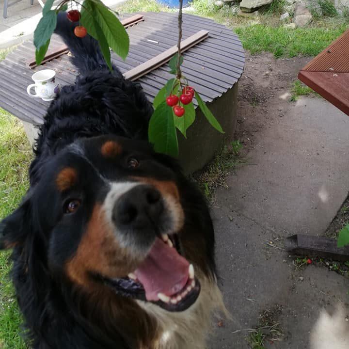 náš pes Oggy